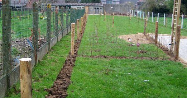 Heg van sleedoorn gelderse roos en rode kornoelje kamperfoelie op latwerk kastanje palen voor - Landschapstuin idee ...