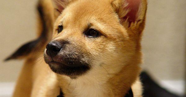 Dogs おしゃれまとめの人気アイデア Pinterest Yomoi ペット用品 可愛すぎる動物 秋田犬