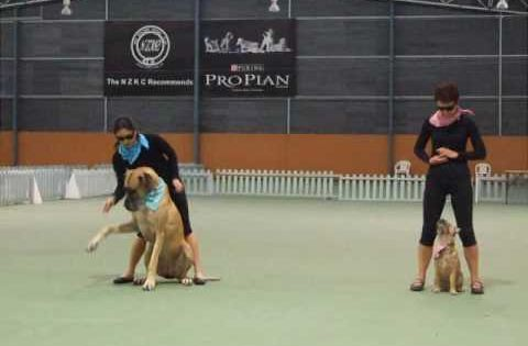 Canine Freestyle Pairs Routine Performance Great Dane Border