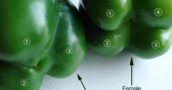 Had no idea!! Flip the bell peppers over to check their gender.