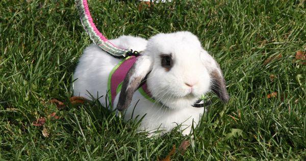 Budget Bunny Website Cheap Ideas To Keep Bunnies Busy