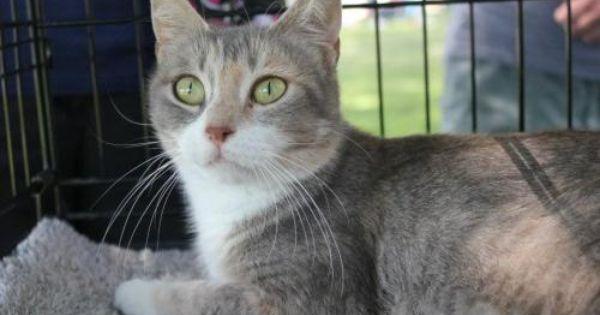 Adopt Calico Mama Kitty On Kitty Cat Breeds Calico Cat