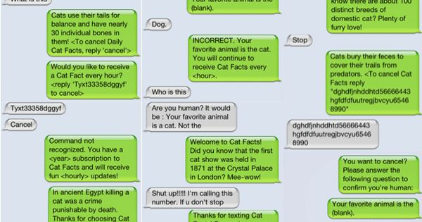 so funny - prank cat texts by friend when they changed their