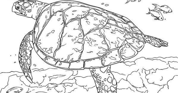 Fantastic Sea Turtle Coloring Pages Printable Free Coloring Sheets Turtle Coloring Pages Animal Coloring Pages Snake Coloring Pages