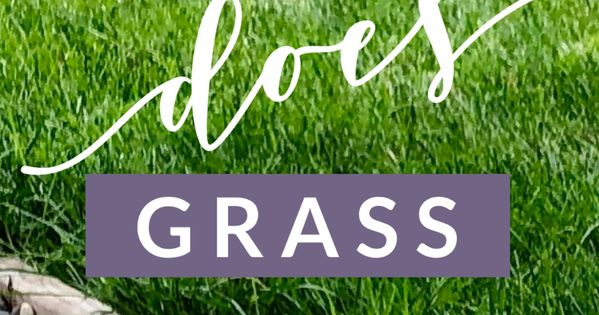 When Does Grass Stop Growing With Images Fall Lawn