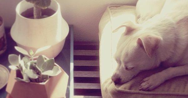 afternoon nap photo by @happymundane on Instagram  Animals  Pinterest