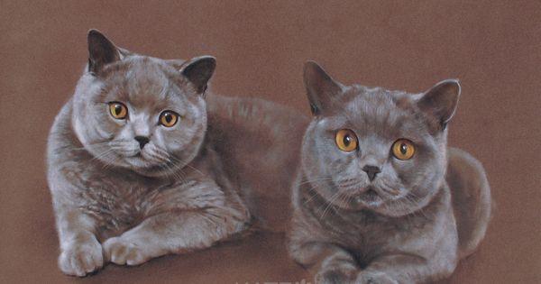 Www Katzportraits Com Ich Zeichne Was Ihnen Lieb Ist Kunst Rund Um Hund Und Katze Individuelle Portraits Von Perso Katze Zeichnen Hund Portraits Skizzen Kunst