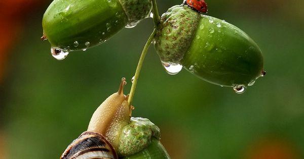 Snail-explorer by Vyacheslav Mishchenko | Macro ...
