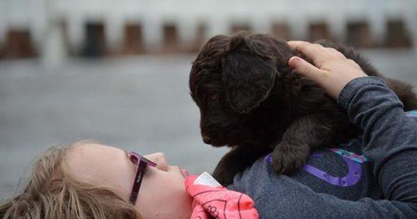 Newfypoo Puppy Https Www Newfiedoodles Com Newfiedoodle Newfypoo Newfy Poodle Puppy Puppies Newfypoopuppies F1b Poodle Mix Dogs Puppies Cute Puppies