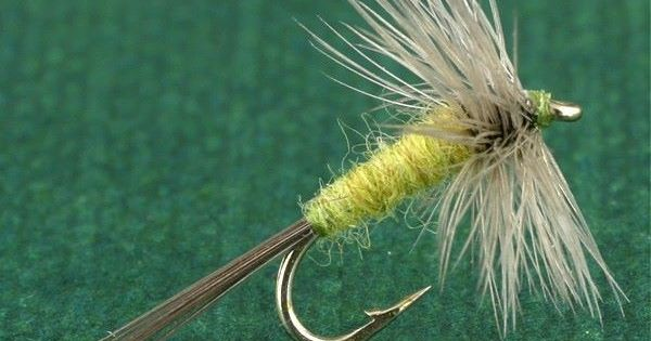 Blue wing olive great on west virginia streams fly tying for Fly fishing west virginia