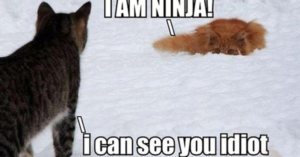 Quote Cute kittens Pinterest Ninjas Funny Cats and See You