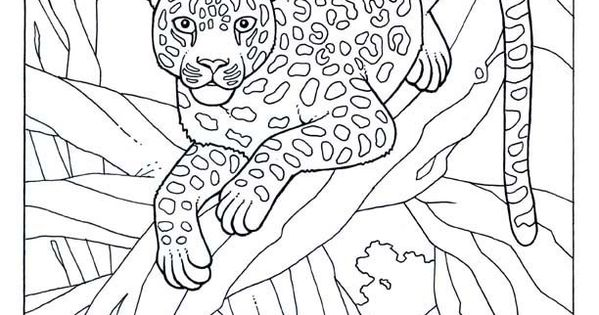 leopard jungle colouring pages page 2  coloring 3