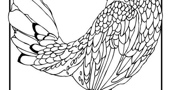 Realistic Chicken Coloring Pages Sketch Coloring Page