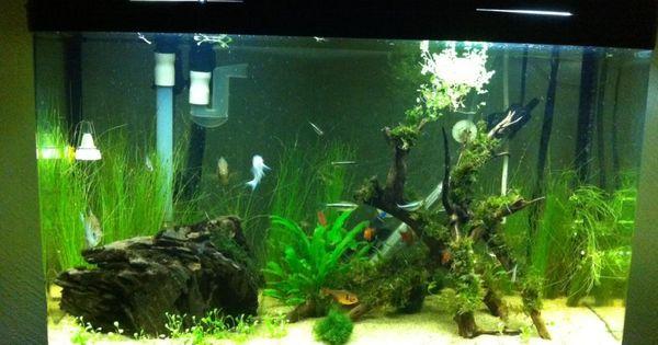 tank update1.JPG 14 gal | Aquariums, Aquascapes | Pinterest | Tanks ... 10 Gallon Vivarium