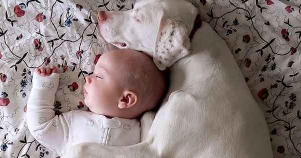 Картинки по запросу baby and dog sleep