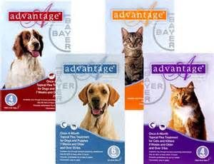 Best Flea Medicine For Dogs And Cats What Is Advantage Ii And How Does It Work Pet Meds Dogs Flea Medicine For Cats