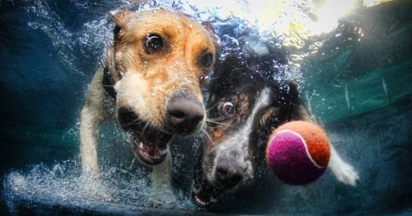 Seth Casteel underwater dog pics