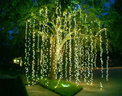 Light up your backyard party with string lights and create a willow