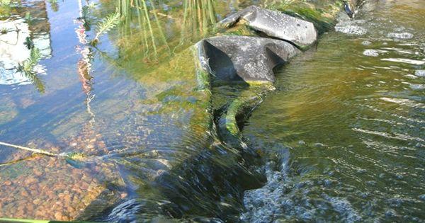 Pin by debra morgan on pond bog filter ideas and designs for Bog filter construction