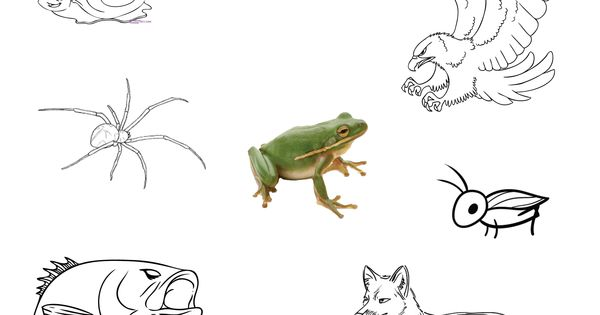worksheet for a frog 39 s prey and predators free for personal use school work pinterest. Black Bedroom Furniture Sets. Home Design Ideas