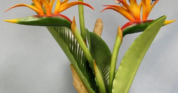 Boehm bird of paradise color inspiration things for