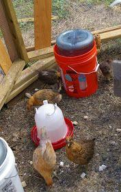 Estos Son Un Ejemplo De Comedero Y Bebedero Casero Visto En La Red Con Suficiente Capacidad Para Comederos De Pollo Bebedero De Pollo Bebederos Para Gallinas