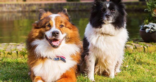 Der Elo Hund Im Rasseportrait Zooroyal Magazin Hunderassen Hund Elo Hunde Rassen