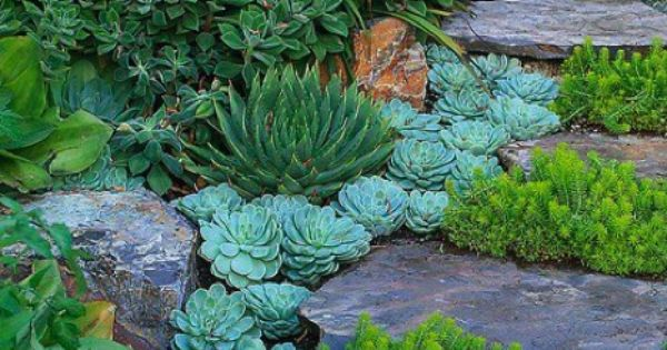 Succulents Planted As Step Edging Echevaria Aloe