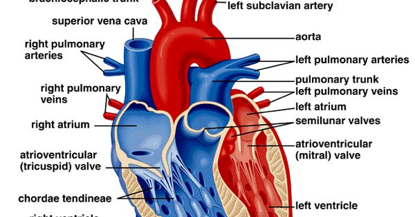 Experts Weigh In On Study Showing >> http://www.imagesnet.net/wp-content/uploads/2014/06/Heart ...