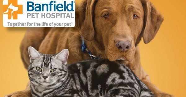 Www Tellbanfield Com Win 1 Of 4 2000 Cash Prizes In 2020 Animal Hospital Pets Your Pet