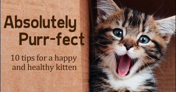Kitten Center Kittens Care Breeds Adoption Tips