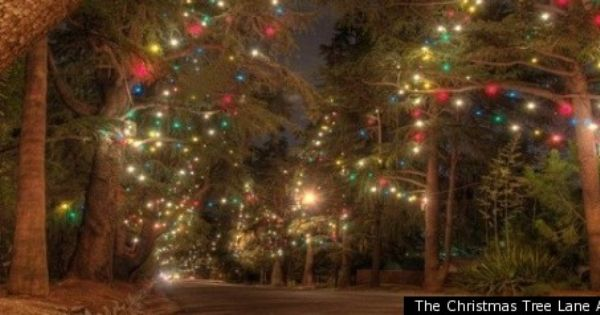 This Weekend Christmas Tree Lane Free Gelato A Holiday Pop Up Shop Holiday Pops Holiday Holiday Lights