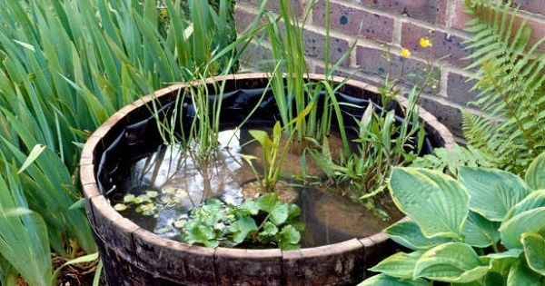 Create your own water garden most beautiful gardens for Make your own pond liner