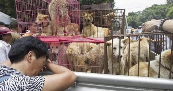 Let S Stop Yulin Festival Forever And For Real Yulin Dog