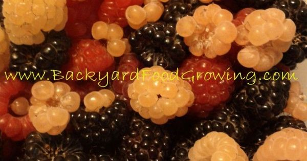 How to Grow Raspberries in Containers. Also has good general info on