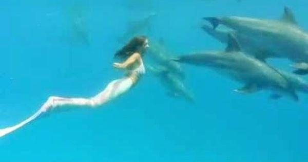 Nuotare Con I Delfini Il Sogno E La Dura Realta A Confronto