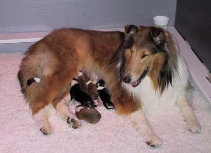 Newborn Puppies Care Of The Newborn Puppy Newborn Puppies Newborn Puppy Care Whelping Puppies