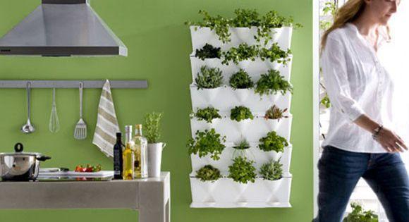 Las hierbas arom ticas ponen un sutil toque diferenciador - Plantas en la cocina ...