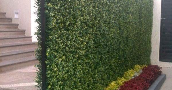 Plantas muro verde buscar con google frentes y muros for Plantas muro verde