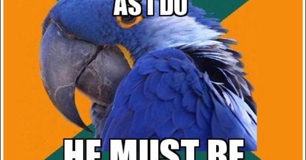 Yup. Paranoid Parrot meme. paranoidparrot