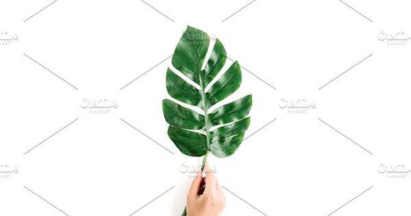 Hand holding tropical palm leaf
