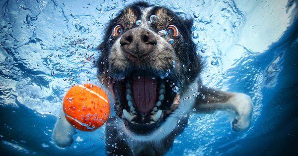 Genius underwater dog photography :-)