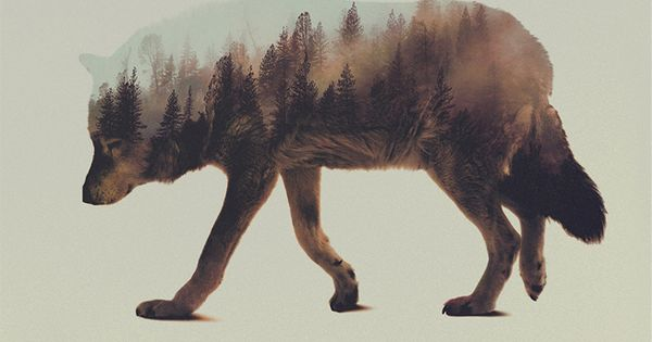 Norwegian visual artist Andreas Lie merges verdant landscapes and photographs of animals to creates subtle double exposure portraits. Snowy mountain peaks and thick forests become the shaggy fur of wolves and foxes, and even the northern lights appear thr...