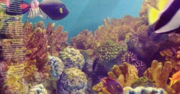 New England Aquarium Sight To Behold Pinterest England Ps And Aquarium