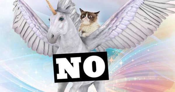 Grumpy Cat Riding A Unicorn Grumpy Cat The Grumpy Group