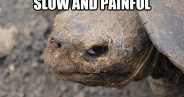 haha turtle humor