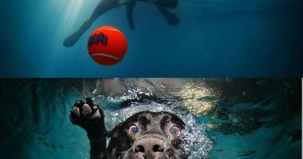 Underwater dog pictures.. so funny