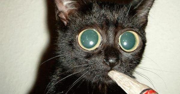 Photo de chat trop dr le chat drole qui fume n 2 chats for Deguisement trop drole