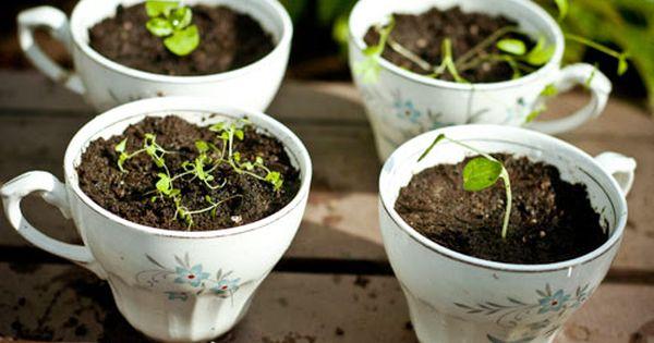 Petit jardinage en famille les premi res plantes de for Repousse amaryllis
