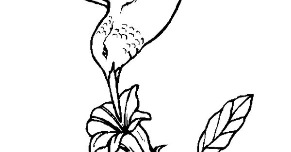 hummingbird at flower coloring page montessori and